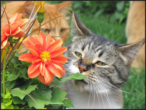 Time to stop and smell the flowers
